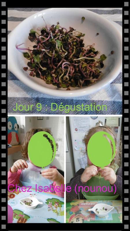 Faire germer des graines de radis dernier jour centerblog - Faire germer des graines ...